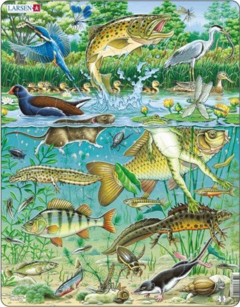 LARSEN Puzzle Život v rybníku 50 dílků
