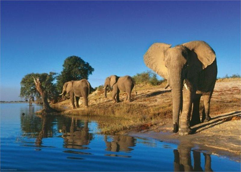 Puzzle HEYE 1000 dílků - Žízniví sloni