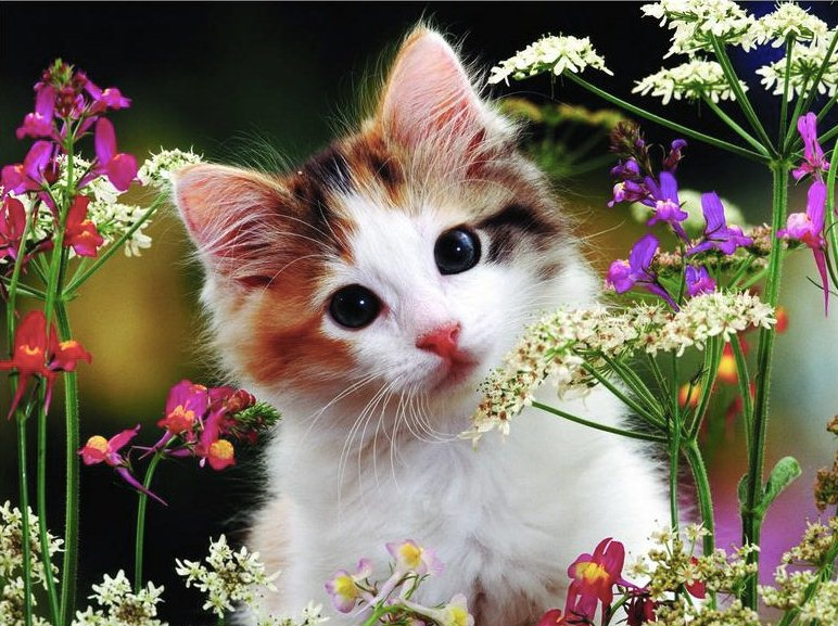 cute kitten wallpapers hd