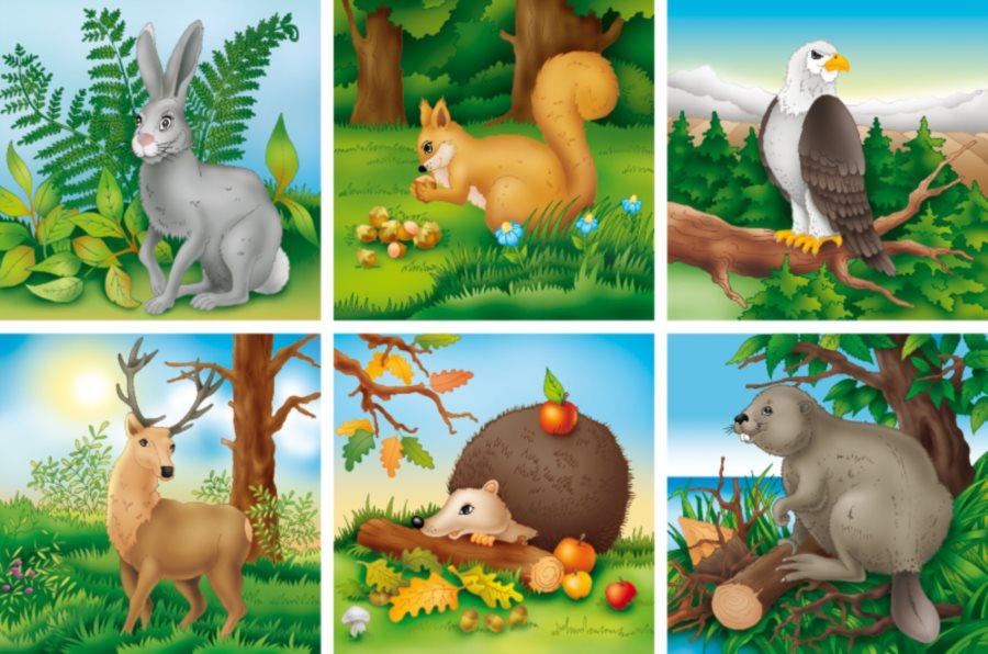 Adamigo Obrazkove Kostky Lesni A Polni Zvirata 16 Kostek Puzzle